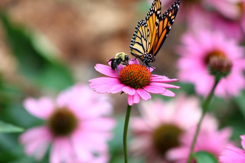 Establishment of a pilot National Pollinator monitoring scheme.