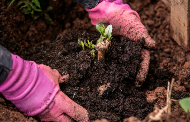 Major study on Horticulture Industry