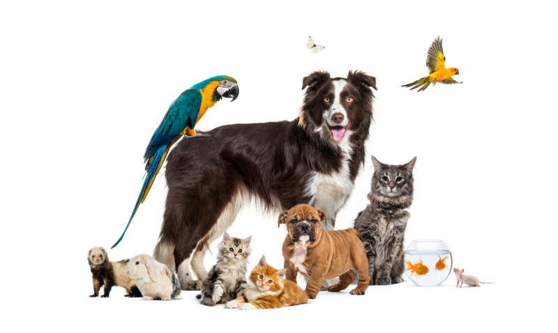 DAFM announces opening of applications from private operators to be an approved quarantine facility for cats, dogs and ferrets