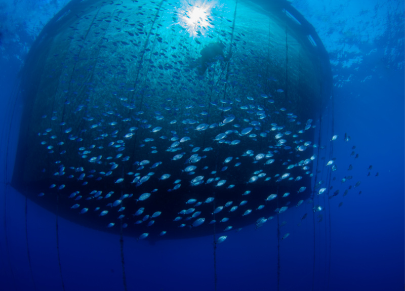 €1 Million in capital grants to 13 aquaculture enterprises