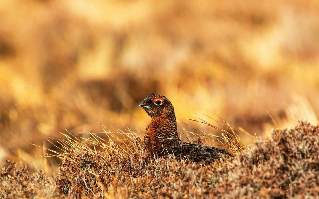 Additional €680,000 funding for blanket bog agri-environment programme